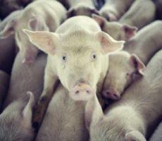 Quer Salvar o Planeta? Pare de Comer Carne