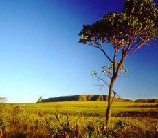 11 Frutas do Cerrado que Todo Brasileiro Deveria Conhecer