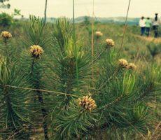 Plante uma Árvore – Campanha conclui 5ª Fase de Plantio na Serra do Gandarela em MG